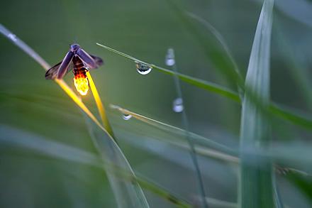Radim - Fireflies